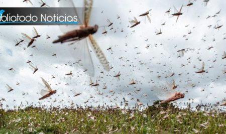 Plaga de langostas en África representa una amenaza global, afirma la ONU